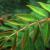 Kumbang-kumbang