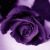 Cyn McCollum's avatar
