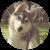 Chraen's avatar