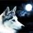 black0wolf