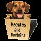 Jessica Shipman   Beagles and Bargains