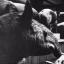 killertapir