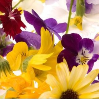 Fran Parker - Beautiful Edible Flowers