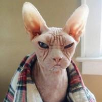 Pepe Cat