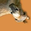 khendar