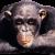 ronsen's avatar