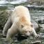 Ursoc