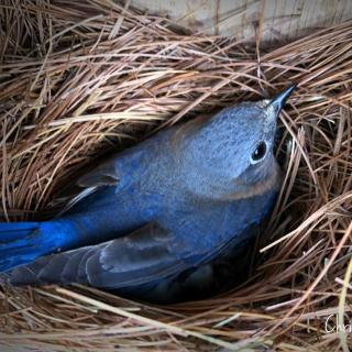Woolwine House Bluebird Trail