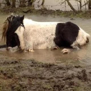 HOPE FOR HORSES