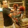 Jual ayam bangkok online