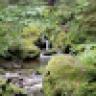 Wald Wassermann