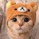 nahé dospívající kočička videa