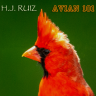H.J. for avian101