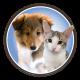 Cody-Cat Chat (@CatChatCaren)