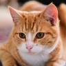 onespoiledcat