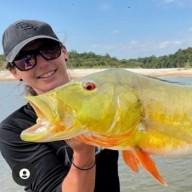 The Bold Owl Team