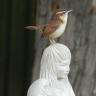 birdseedinmyshoe