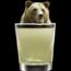 ginfizzbear