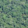 CNDH aprova relatório de direitos humanos e territorial de indígenas isolados em Ituna-Itatá, no Pará
