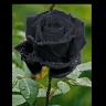 blackpierre