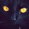 Kitty Bloger