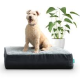 Dozer pet beds