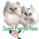 Sweet Purrfections